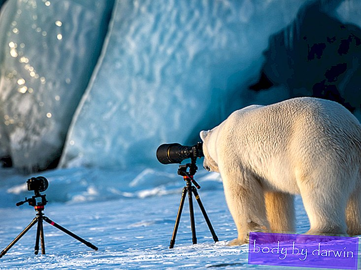 Nuestros finalistas favoritos de los Comedy Wildlife Photography Awards