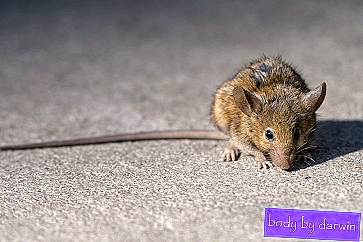 Ratten lieben den Klimawandel-Nexus Media News