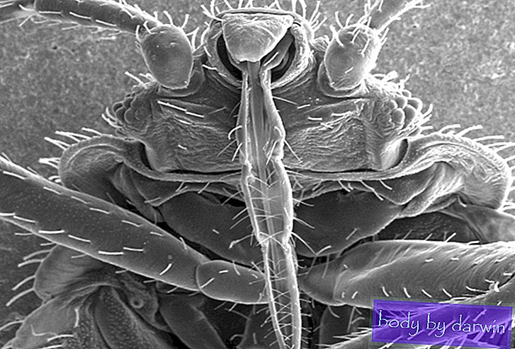 The Bugs Behind The Bed Bug Genome-Onze moderne plagen